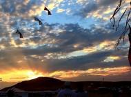 Antelope Island Stampede Festival 2013